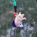 中国で豚がバンジー 非難相次ぐ