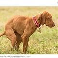 犬の糞の始末は飼い主のマナーだが…(画像は『NZ Herald 2021年5月6日付「Nine-year-old's savage note left for 'idiot' dog owners who ruin his walks」(Photo / 123rf)』のスクリーンショット)