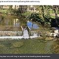 普段は澄んだ水が流れる英ウェールズのディライス川(画像は『BBC 2021年4月16日付「'Milky' River Dulais now clear after tanker spill」』のスクリーンショット)