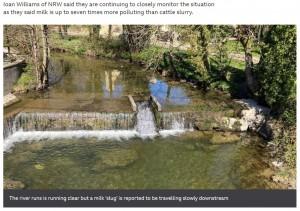 [画像] 【海外発!Breaking News】約3万リットルの牛乳を積んだトラックが横転 川が真っ白に染まり牛乳の滝まで出現(英)<動画あり>