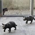 2匹の猫 山奥の小さな美術館を世界的に有名にした理由