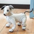 初対面の人には唸って威嚇 思った以上に犬だった新型「aibo」
