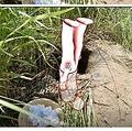 頭から穴にはまった変死体が発見される(画像は『東森新聞 2019年6月21日付「男「頭下腳上」公墓離奇猝死 法醫這樣說…」(圖/東森新聞)』のスクリーンショット)
