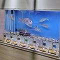 以下画像は名古屋港水族館提供