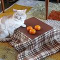 こたつ目当てでの購入も 猫専用こたつ付きのみかんが今年も発売