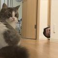「困らせフェチ」の夫が不可解ないたずら…猫も困り顔で助け求める
