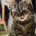 「ちゅーる」だと思ったのに…舌打ちしそうな表情の猫が話題に