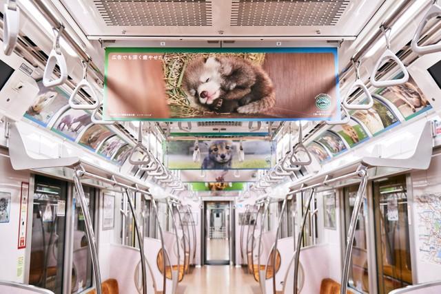 """「どこを見渡してもかわいい動物の赤ちゃん」だらけ 森永乳業マウントレーニアの""""胸キュン""""電車が話題"""