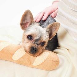 犬を飼い始めるとき、飼い主が知っておきたいご近所事情を家庭犬訓練士に聞いてみた