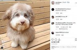 人間のような顔を持つ犬(画像は『Nori Porkchop 2018年6月29日付Instagram「I survived. And flourished.」』のスクリーンショット)