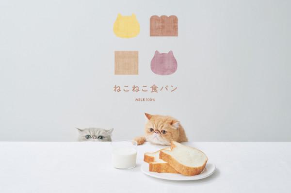 まさかのねこ型!? かわいすぎる高級食パン店「ねこねこ食パン」があべのにオープン!