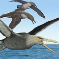 約5000万年前の南極大陸に生息か 翼の幅が最大で約6mの鳥