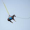 スイス・セーニュレジエで行われたスイス軍と獣医学研究施設による負傷した馬の搬送を想定した訓練で、ヘリコプターにつり下げられて運ばれる馬(2021年4月9日撮影)。(c)Fabrice COFFRINI / AFP