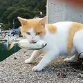 くつろぐ猫 魚を食べずにおもちゃにして遊ぶ姿に可愛いの声