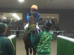 土曜東京5R新馬は戸崎圭騎乗のグレイスアンが1番人気にこたえてV
