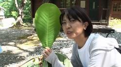 """宮地真緒、顔より大きい葉にビックリ!移住先の長野で""""朴葉寿司""""作りに挑戦"""