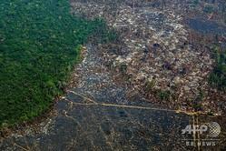 破壊された森林を捉えた航空写真。ブラジル・パラ州アルタミラの保護区(2019年8月28日撮影)。(c)Joao LAET / AFP