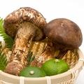 美味しい松茸の選び方