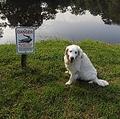 ワニに襲われた犬、幸いにも怪我はなく(画像は『Tampa Bay Times 2019年7月12日付「Florida man kicks gator in snout, saves dog」(Courtesy of Buddy Ackerman)』のスクリーンショット)