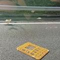 岐阜の中央自動車道でニワトリが逃げ出す 追い回す騒ぎに