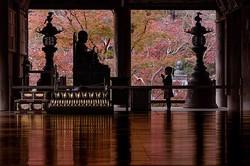 寺の礼堂で娘の姿を撮影してきたしんごさんの作品=しんごさんのツイッター(@shingo_camera)