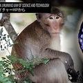 猿の胚にヒトの幹細胞 臓器不足解消の可能性も世界中で生命倫理に懸念