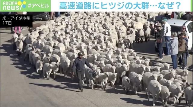 2600頭の「羊の大移動」で見物客まで密に 高速道路が一時通行止め アメリカ・アイダホ州