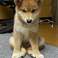 「知ってる座り方とちょっと違う」犬の写真がTwitterで話題