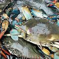 医師は生水を飲まない、海鮮や食肉は非加熱では食べないよう指導している( jules thomas on Unsplash)
