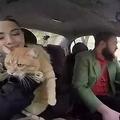 ウクライナを走る、猫が乗務するタクシー 家庭的な雰囲気を目指し