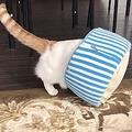 提供:猫カフェ&ギャラリーGATO(@GATO31320212)さん