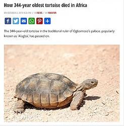 「344歳で死んだ」と伝えられたカメ(画像は『Vanguard 2019年10月3日付「How 344-year oldest tortoise died in Africa」』のスクリーンショット)