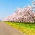 コロナ禍をきっかけに、田舎暮らしに興味を持つ人が増えているが、中国人から見ても日本の田舎には魅力があるようだ。中国の動画サイトはこのほど、「日本の田舎は中国と全然違う」と紹介する動画を配信した。(イメージ写真提供:123RF)