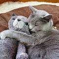 ぬいぐるみの「お友達」を抱きしめて寝る猫さん 尊すぎる姿が話題に