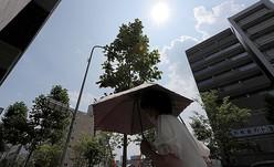昨夏も京都市内は厳しい暑さとなり、35度を超える猛暑日も多かった(2020年8月、京都市中京区)