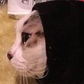 まるで「カオナシ」服の手首に詰まって顔だけ出す猫に反響集まる