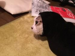 服のソデに入り込んで出られなくなった猫さんが「カオナシ」みたい!?