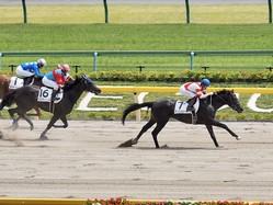 【東京6R】マッスルビーチが2馬身差の快勝!2勝目