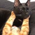 黒猫兄さんが好きすぎて?猫の「だいしゅきホールド」が話題