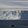 西南極半島(2016年3月6日撮影、資料写真)。(c)EITAN ABRAMOVICH / AFP