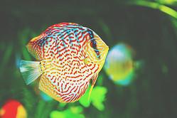 前世に忘れてきたものがわかる【心理テスト】魚になったあなた、帰りたい場所は?