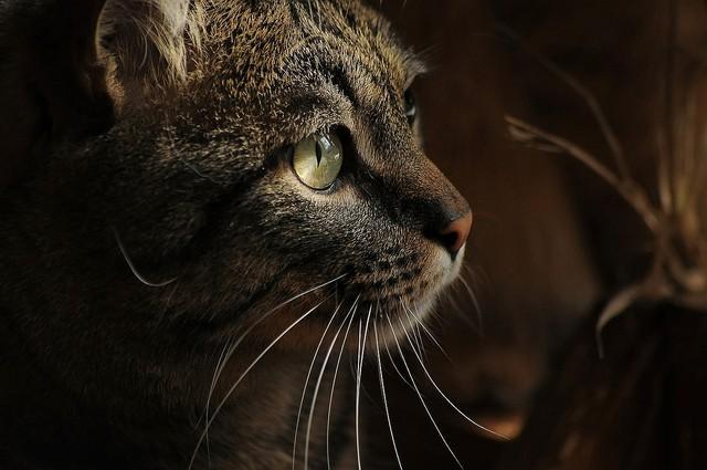 [画像] 50代の夫婦、猫の避妊を怠り劣悪な環境で139匹飼って書類送検 病気の猫や死骸も