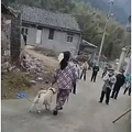 村に感染者がいたことから警察官によって犬が殺される(画像は『The Sun 2020年2月26日付「'EXCUSE FOR ABUSE' Coronavirus quarantine cops batter terrified little dog to death in China in horrifying bid to stop bug spreading」(Credit: AsiaWire)』のスクリーンショット)