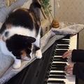 いい迷惑な曲?飼い主が弾く「ねこふんじゃった」にブチギレる猫