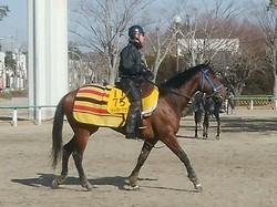【東京新聞杯】テトラドラクマ 古馬の牡馬相手がカギ