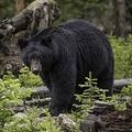 米国の森で迷子になった3歳児を2日後に無事発見「クマと一緒にいた」