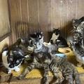 ネコ144匹飼育 50代夫婦を送検へ