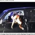 警察犬、車内のストーカー容疑者を取り押さえる(画像は『The Sun 2019年12月21日付「CANINE OF DUTY Amazing moment hero police dog Duke leaps through truck window to snare fugitive driver」』のスクリーンショット)