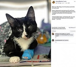 30分間洗濯された後、復活した猫(画像は『Animal Medical Centre 2019年4月1日付Facebook「Meet poor little Poppy who miraculously survived a full wash cycle!」』のスクリーンショット)