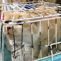 体が大きくなっても外に出してもらえず、キャリーケースに何年も押し込められたままの猫